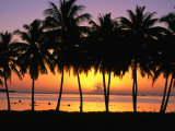 Palm Trees at Sunset  Cook Islands