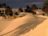 Palm Trees and Sand Dunes  Douz  Tunisia