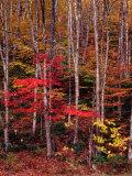 Wonderful Autumn Colours of Green Mountains in Vermont  Vermont  USA