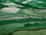 Landscape of Rice Paddies Guizhou  China