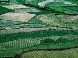 Landscape of Rice Paddies Guizhou  China