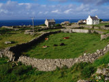 Farm at Inishmore  Ireland