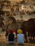 Boys and Camels at Pushkar Camel Fair  Pushkar  Rajasthan  India