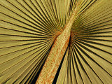 Detail of a Palm Tree Leaf at the Riverfront Complex  Fort Lauderdale  Florida  USA