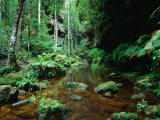 Temperate Rainforest at Greaves Creek  Feature of Grand Canyon Walk Blue Mountains NP  Australia