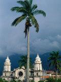 Cathedral of Merida and Palm Tree  Merida  Venezuela
