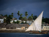 Traditional Dhow Sailing Past Town  Lamu  Coast  Kenya