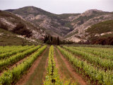 Vineyard and Typical Alpilles Landscape Near Mausanne  Provence-Alpes-Cote d'Azur  France