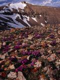 Mt Lincoln  Colorado  USA