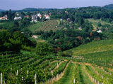 Vineyards along Kahlenburg Strasse  Near Wine Village of Nussdorf  Vienna  Austria