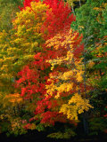 Autumn Colours in Marquette County  USA