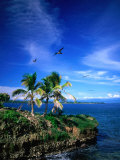 Birds Flying Over Palm Trees at Swan Key  Bocas Del Toro Islands  Panama