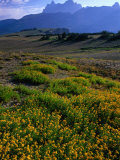 Wildflowers and Mountains in Distance Grand Teton National Park  Wyoming  USA