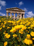 Greek Temple in Spring  Agrigento  Sicily  Italy
