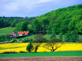 Rape Fields and Forests Surrounding Farm House on Kulla Peninsula  Skane  Sweden