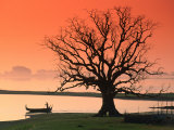 Bare Tree and Boat on Edge of Taungthaman Lake at Sunrise  Amarapura  Mandalay  Myanmar (Burma)