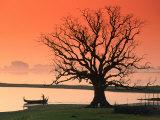 Bare Tree and Boat on Edge of Taungthaman Lake at Sunrise  Amarapura  Mandalay  Myanmar (Burma)