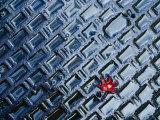 A Single Red Maple Leaf on a Steel Manhole Cover  Kyoto  Kinki  Japan