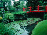 Bridge and Pond of Japanese Style Garden  Kildare  Ireland