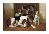 Foxhounds And A Terrier