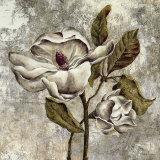 Silver Magnolia II