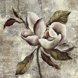 Silver Magnolia I