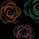 Rose Trio I