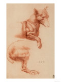 Study of a Pomeranian Dog  Drawing  Royal Library  Windsor