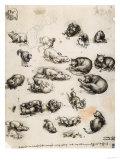 Cats  Lions and Dragons  Drawing  Royal Library  Windsor