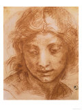 Head of a Young Woman  Drawing by Andrea Del Sarto  Uffizi Gallery  Florence