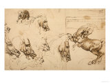 Rearing Horse and Study of Horse  Lion and Human Heads  Drawing  Royal Library  Windsor