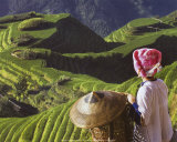 Zhuang Girl with Rice Terraces
