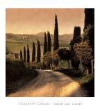 Country Lane  Tuscany