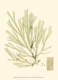 Marine Algae II