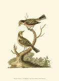 Petite Bird Study IV