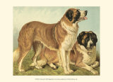 St Bernard