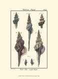 Sea Shells I