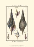 Sea Shells III