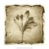 Floral Impression VII