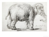 Elephant  1637  Black Chalk Drawing