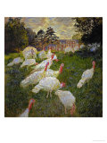 The Turkeys  1877