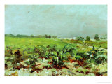 View of the Vineyards  1880
