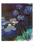 Waterlilies and Agapantes  1914-1917