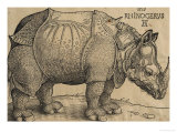 Rhinoceros  1515  Etching
