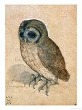 Sreech-Owl, 1508 Giclée par Albrecht Dürer