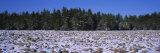 Rocks in Snow Covered Landscape  Hickory Run State Park  Pocono Mountains  Pennsylvania  USA