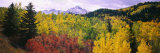 Trees on a Landscape  San Juan Mountains  Colorado  USA