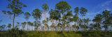 Trees on a Landscape  Everglades National Park  Florida  USA