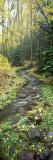 Stream Flowing through a Rainforest  Utah  USA