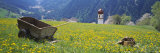 Wheelbarrow in a Field  Austria